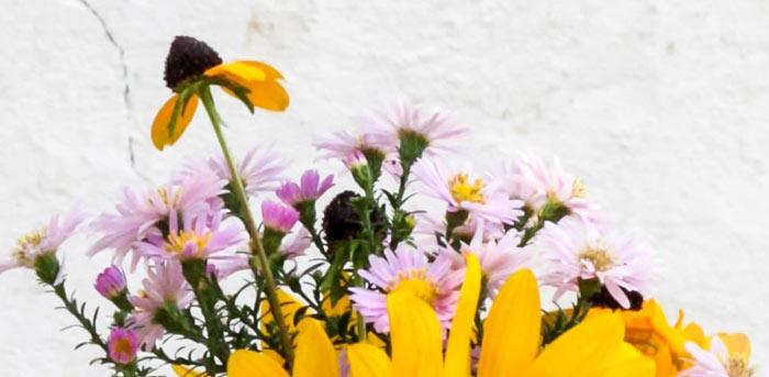 conjunto de flores do campo