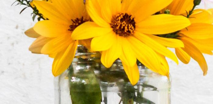 flor do malmequer